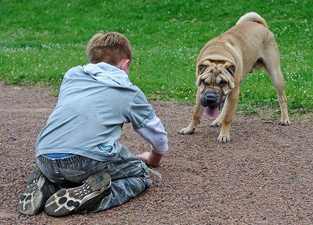 faltenhund mit kindern