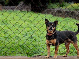 hund zaun springen abgewoehnen tipps