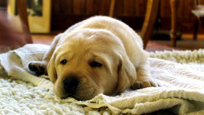 Wenn Sich Der Hund Daheim Erleichtert Hundemagazinnet