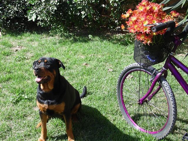 fahrrad fahren mit hund darauf achten damit es funktioniert. Black Bedroom Furniture Sets. Home Design Ideas