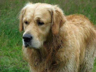 hund stinkt
