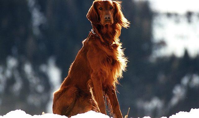 Hundefell im Winter