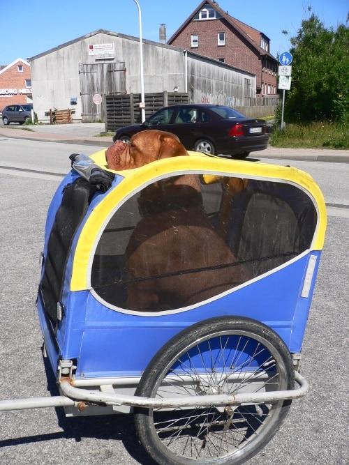 Hundefahrradnhänger