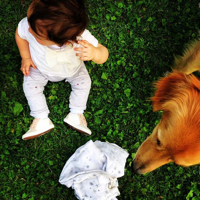 Hovawart Familienhund mit Kindern