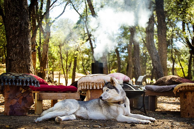 husky sommer pflege