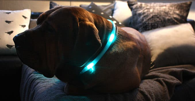 leuchthalsband-fuer-hunde