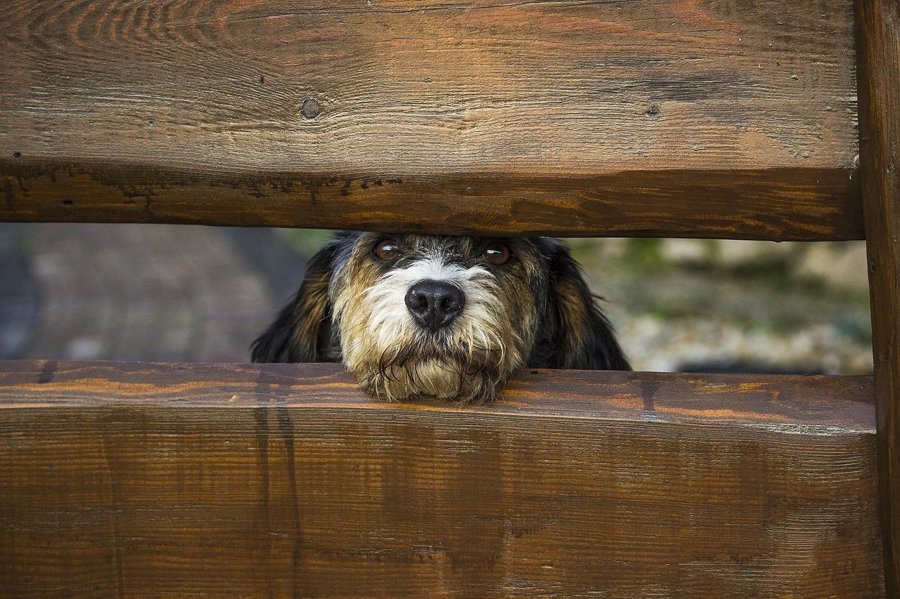 Hundezaun - Alle bekannten Hundezäune vorgestellt und erklärt