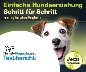 online-hundetraining-testbericht