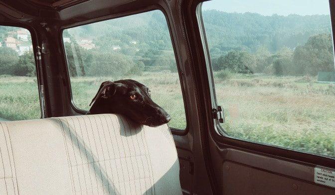 kleinmetall hundebox fehlt auf dem Bild. Der Hund ist nicht ausreichend gesichert im Auto