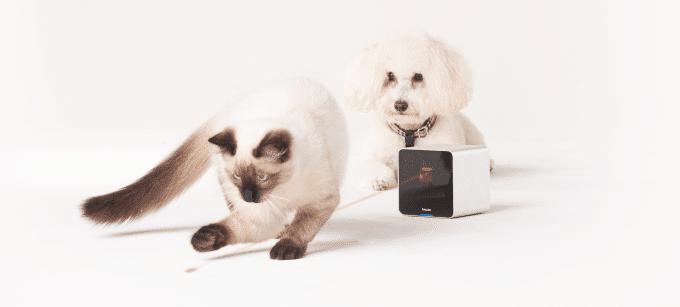 petcube laser