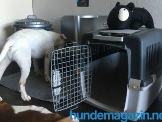 transportbox gulliver - ideale Transportbox für Katzen und Hunde