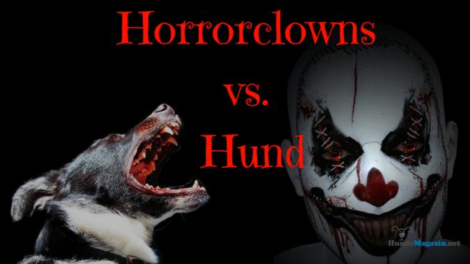 horrorclown-hund