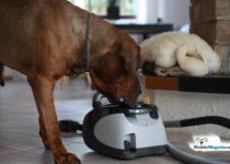 hund-angst-staubsauger-ueberwinden