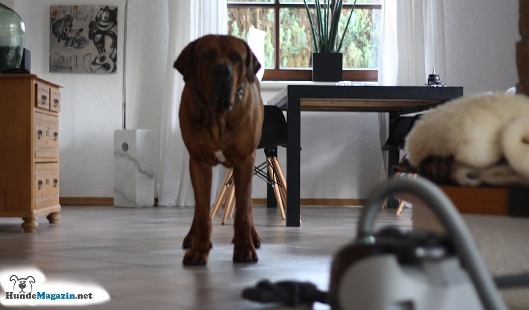 hund-angst-vor-staubsauger-schritt-1