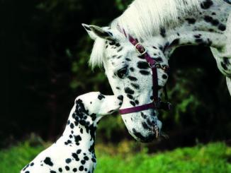 messe-hund-und-pferd-dortmund