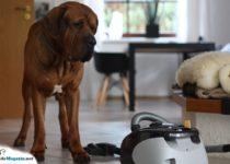 staubsauger-hund-probleme