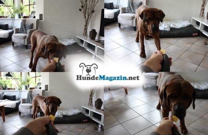 Staubsauger Hund lernen