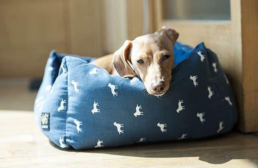 Schöne Hundebetten hundebett die schönsten hundenbetten im vergleich 2017 201