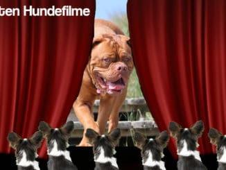 beste-hundefilme