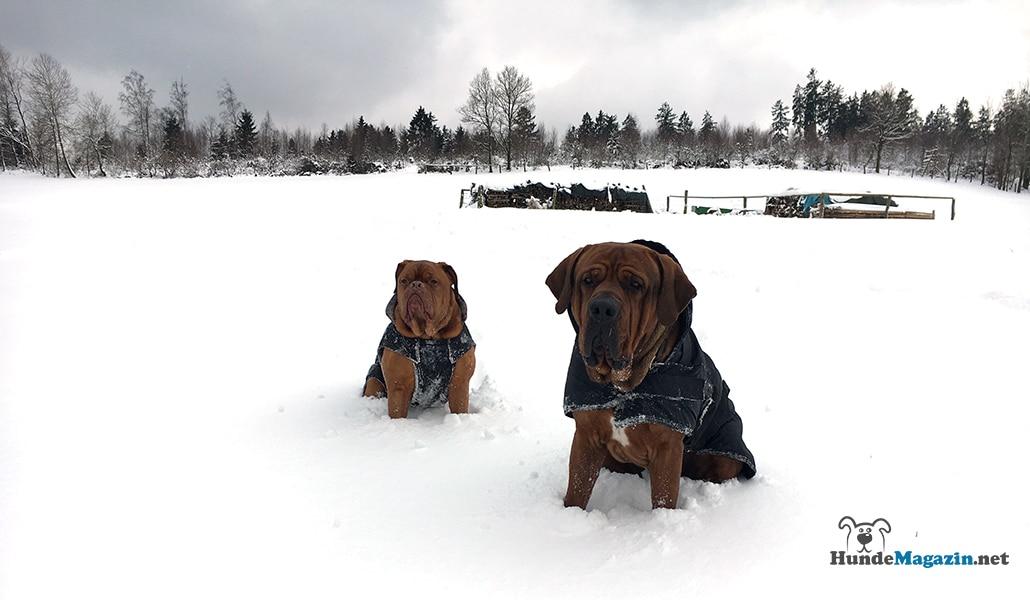 Hundemantel - Sinnvolle Hundebekleidung zur kalten Jahreszeit