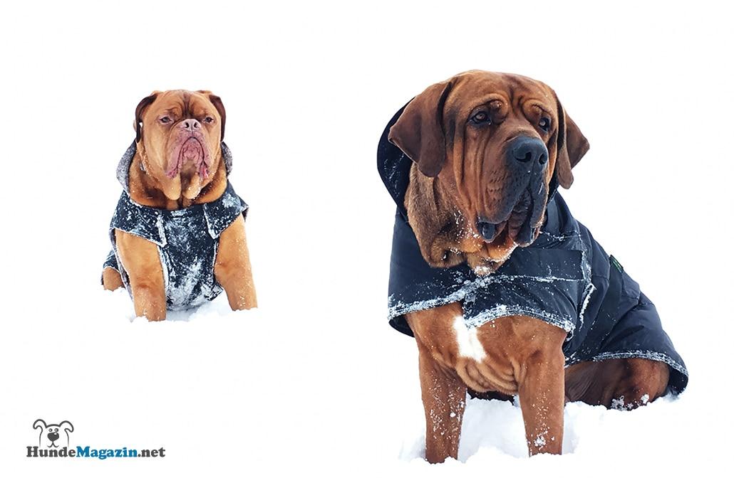 Hundemantel für große Hunde