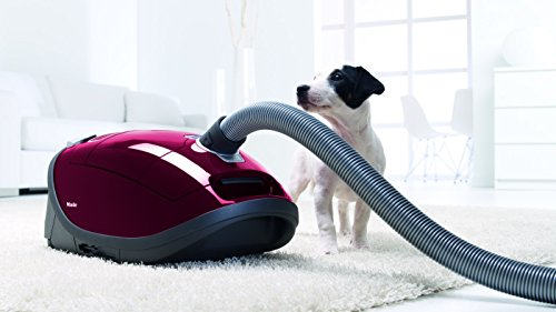 miele-complete-c3-cat-und-dog