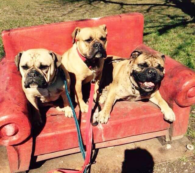 continental-bulldogg-couch