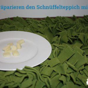 schnueffelteppich-mit-kaese