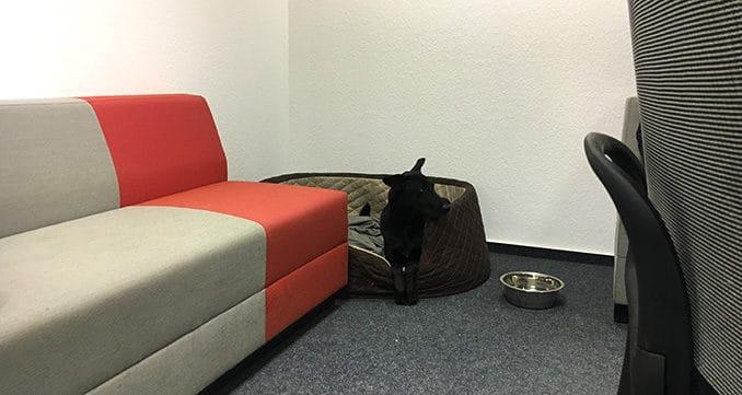 hund im buero vorbereitung und erste Begegnung