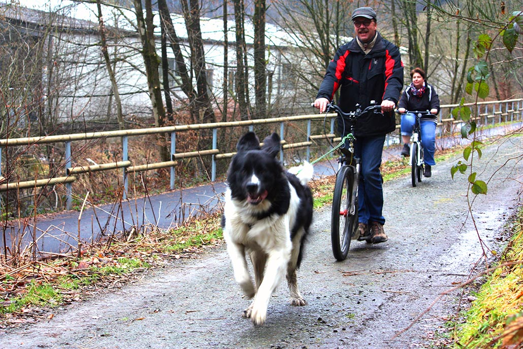 zughundeschule nrw dogscooter