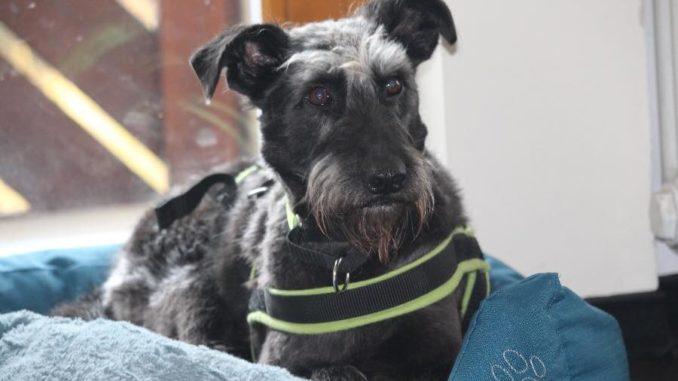 Hund in pulheim vermisst
