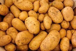 kartoffel als ersatz für Getreide im Hundefutter beliebt