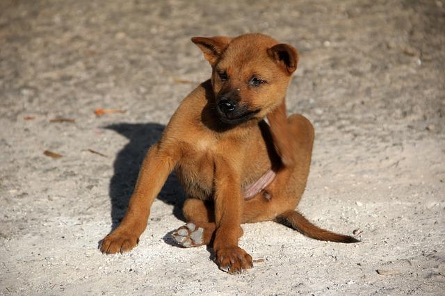 hund getreideallergie juckreiz