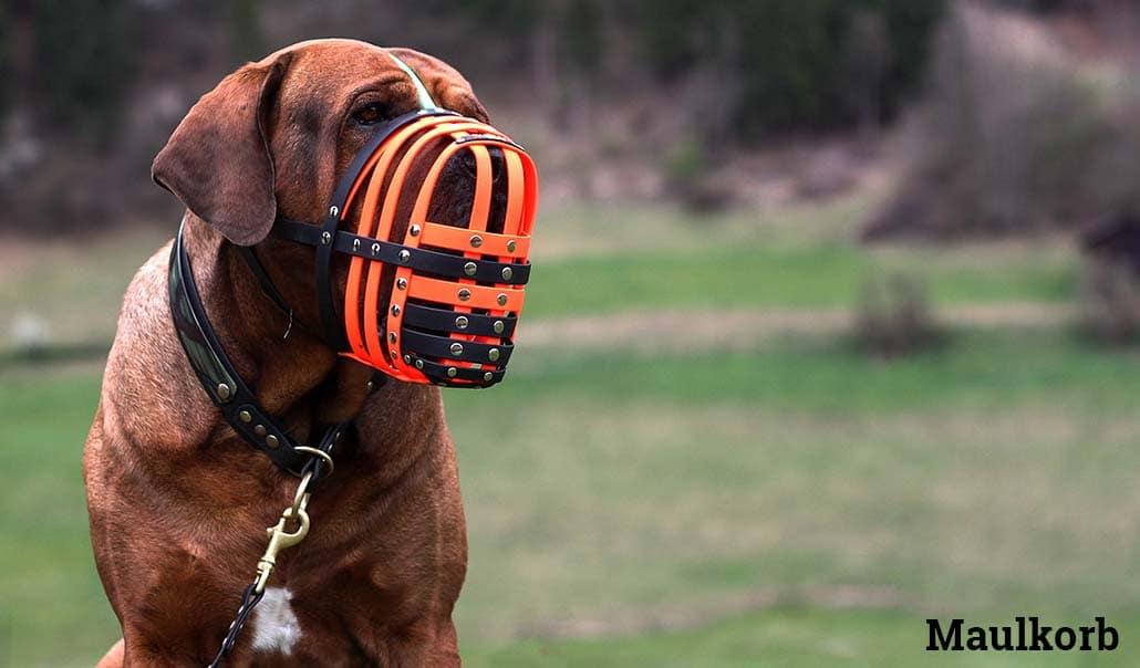 maulkorb hund hundemaulkorb