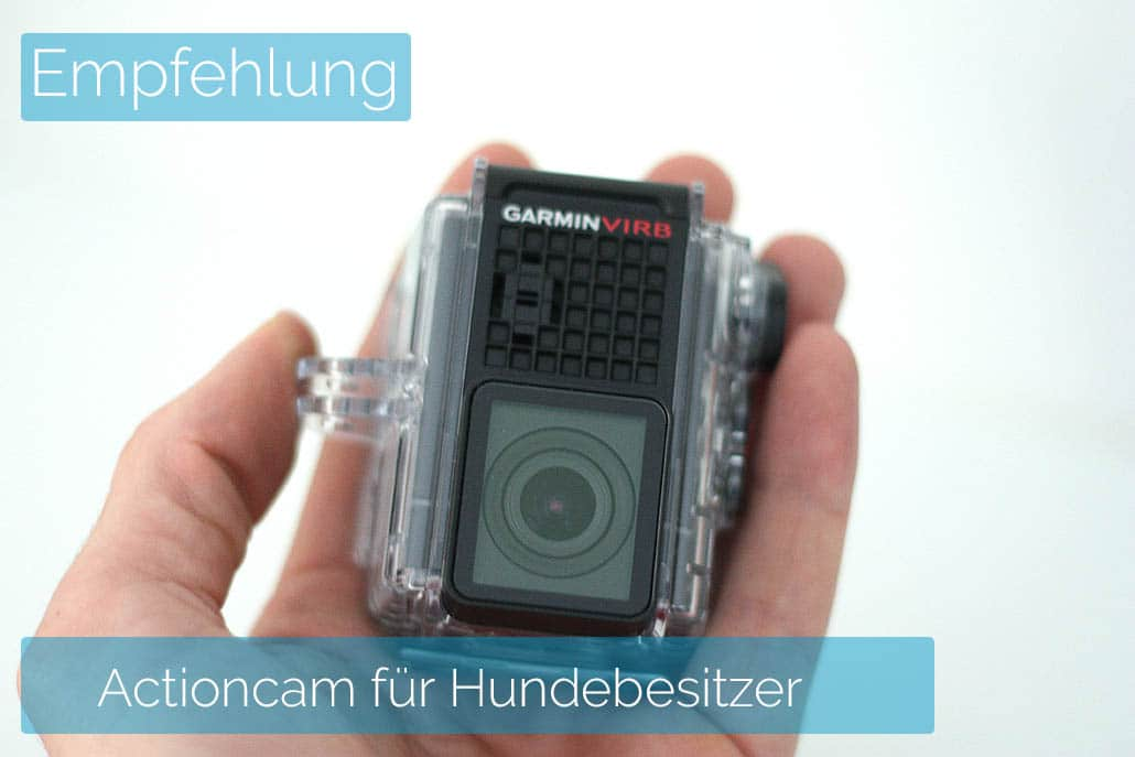actioncam dogscooter