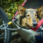 hundebuggy umbauen fahrrad