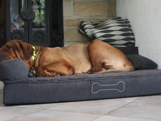 pallina hundebett orthopädisch