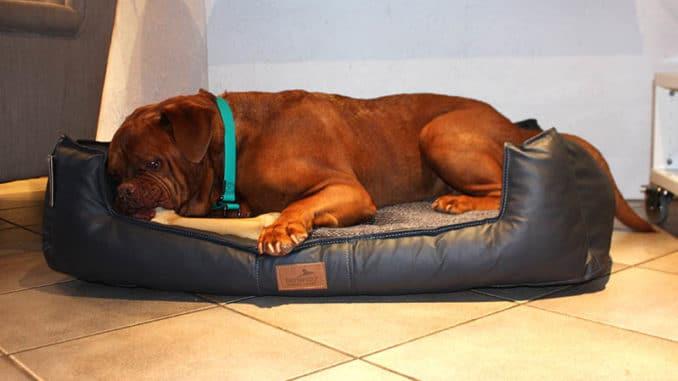 hundebett linus test