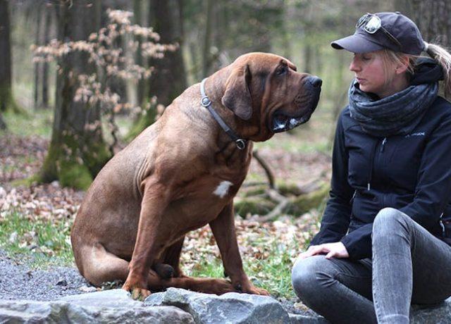 rokua jacket vaude hund
