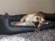 Tierlando Hundebett Test