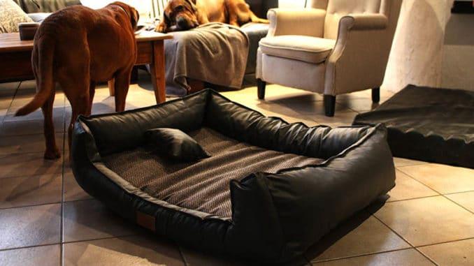 tierlando orthopaedisches hundebett linus test