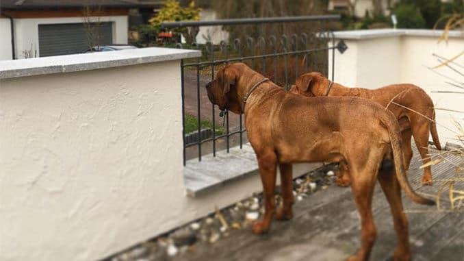 amazon hund grundstueck