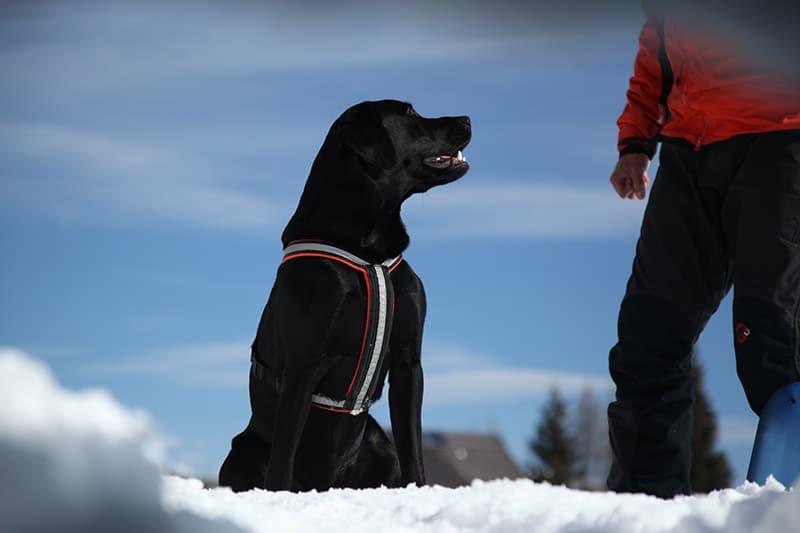 hund bergretter
