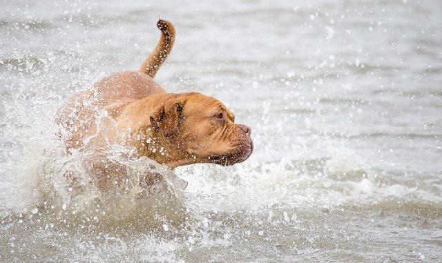 magendrehung hunde