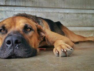 hund krankenversicherung