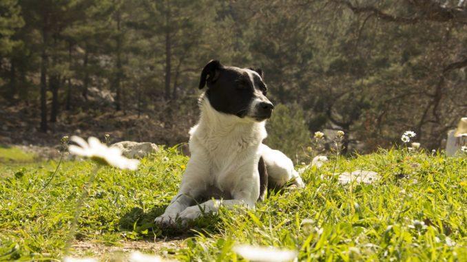 gesundes futter hunde
