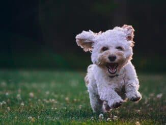 nahrungsergaenzung fuer hunde